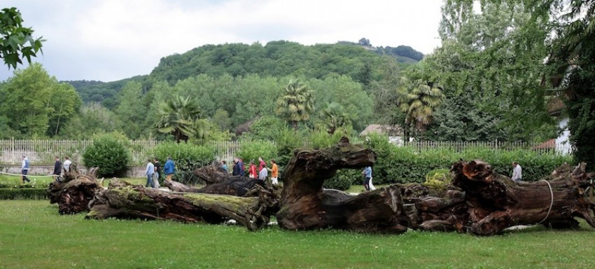 Junto a Casa Rural UTXUNEA, en el centro de los Valles Tranquilos del Bidasoa se encuentra BERTIZ, el primer Parque Natural declarado en Navarra. Un espacio singular, tanto por sus caracteristicas naturales, como por su historia. Bertiz Bidasoa Utxunea casa adaptada